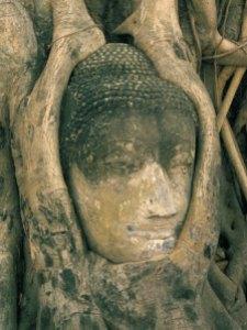718-289head-of-buddha-statue-overgrown-with-tree-roots-wat-phra-mahathat-ayuthaya-ayutthaya-thailand-posters