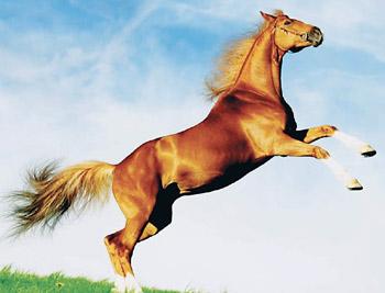 June09-21sapta_horse